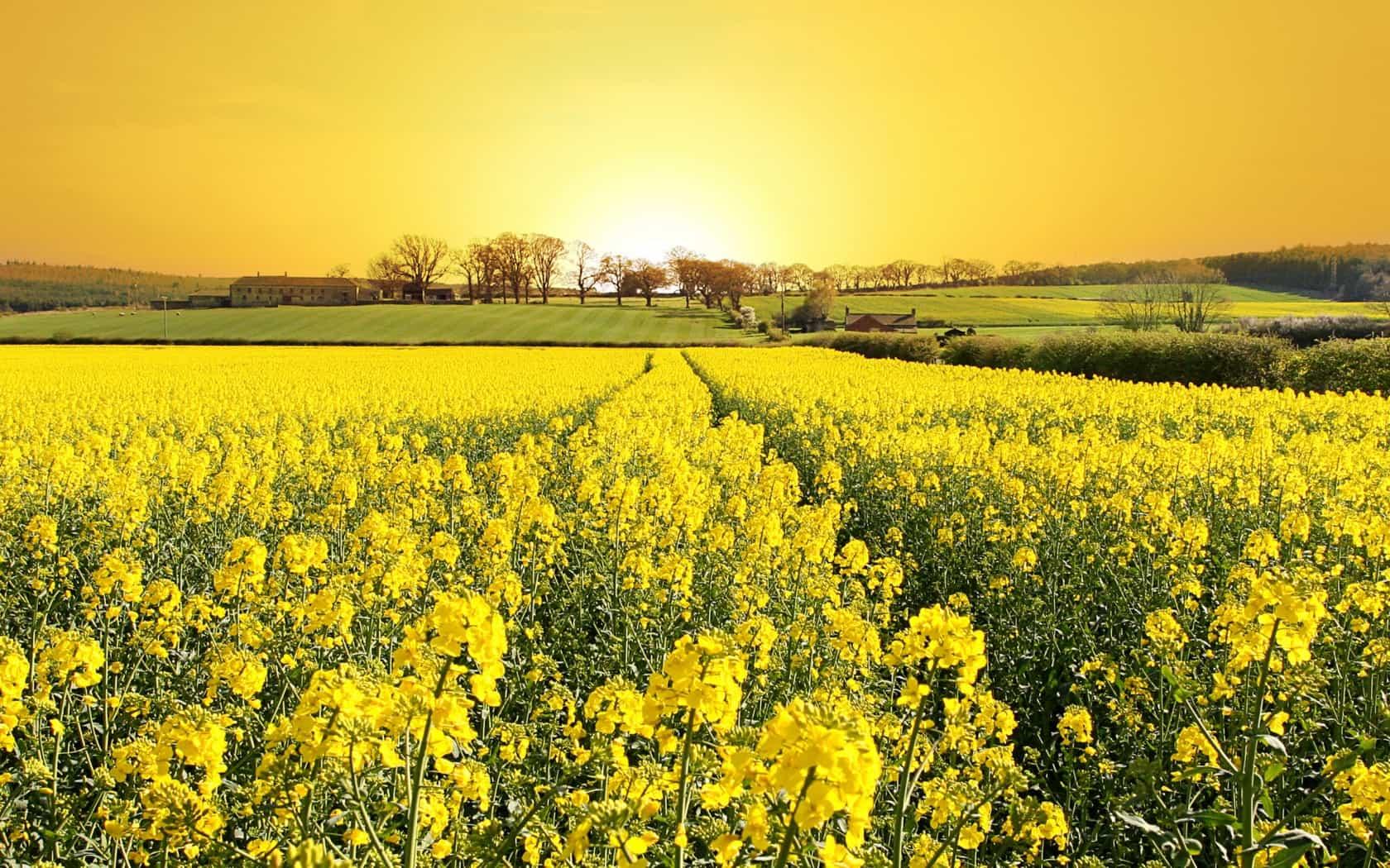 К чему снится жёлтый цвет по сонникам Шеременской, Прозорова