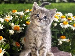 Котик в ромашках