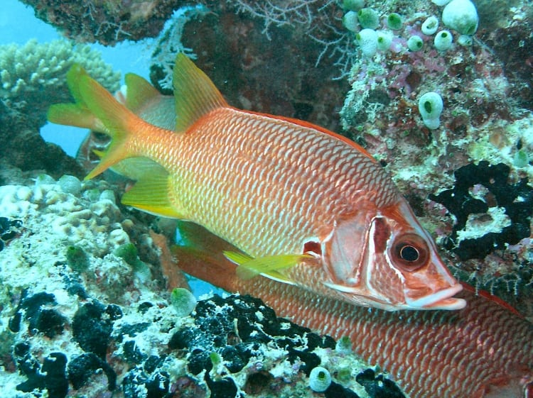 Приснилась рыба — как правильно толковать по сонникам