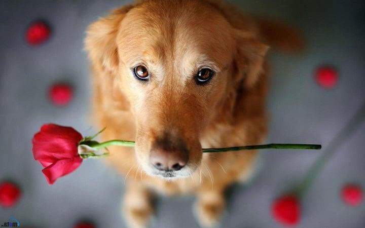 К чему снится собака для женщины по сонникам Миллера, Фрейда и Лоффа