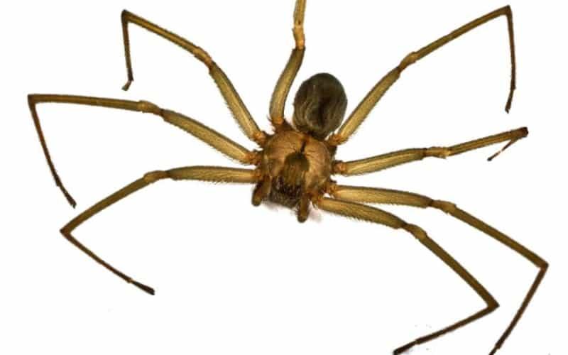 Вид паука