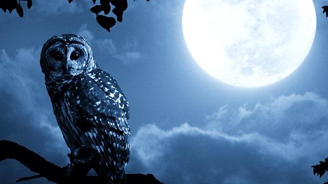 Лунный сонник сбываются сны