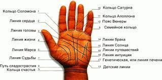 основные линии на руке фото