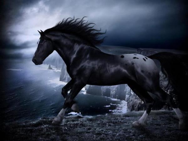 Черный конь на утесом