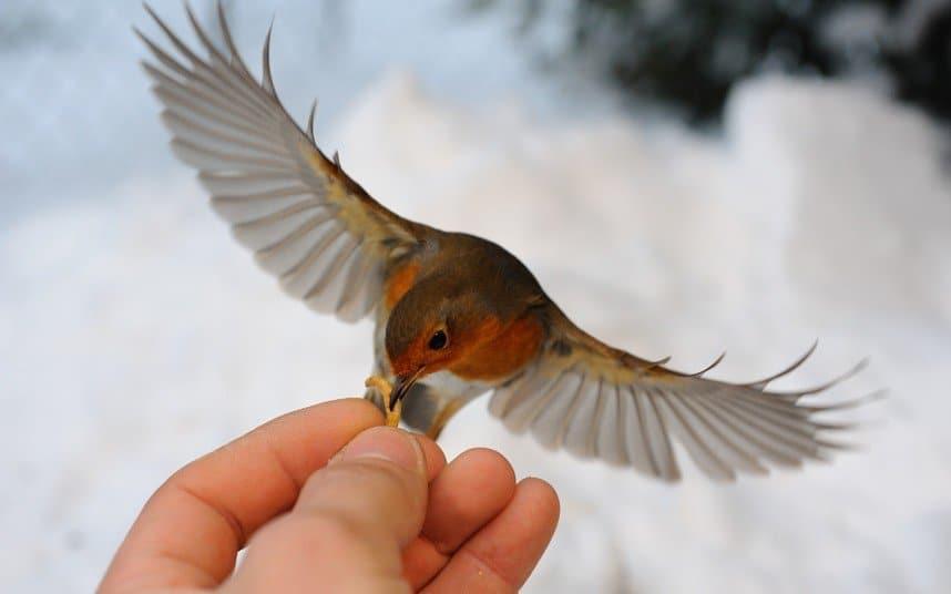 Птенчик на руке