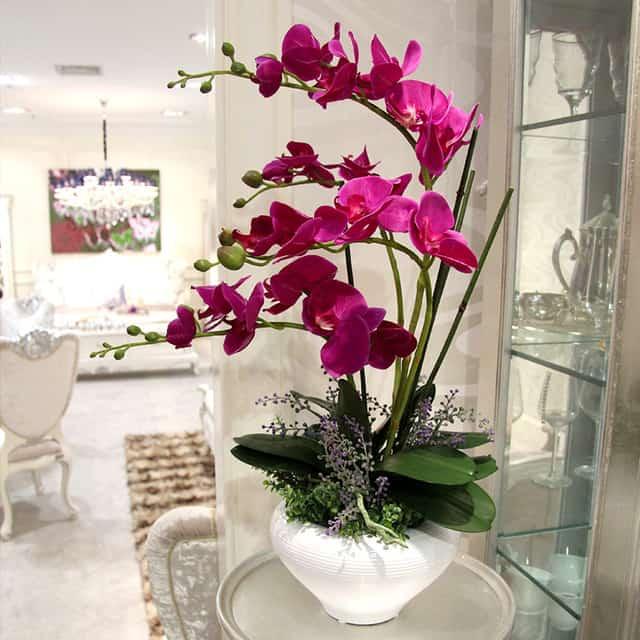 орхидею нужно правильно разместить в жилище