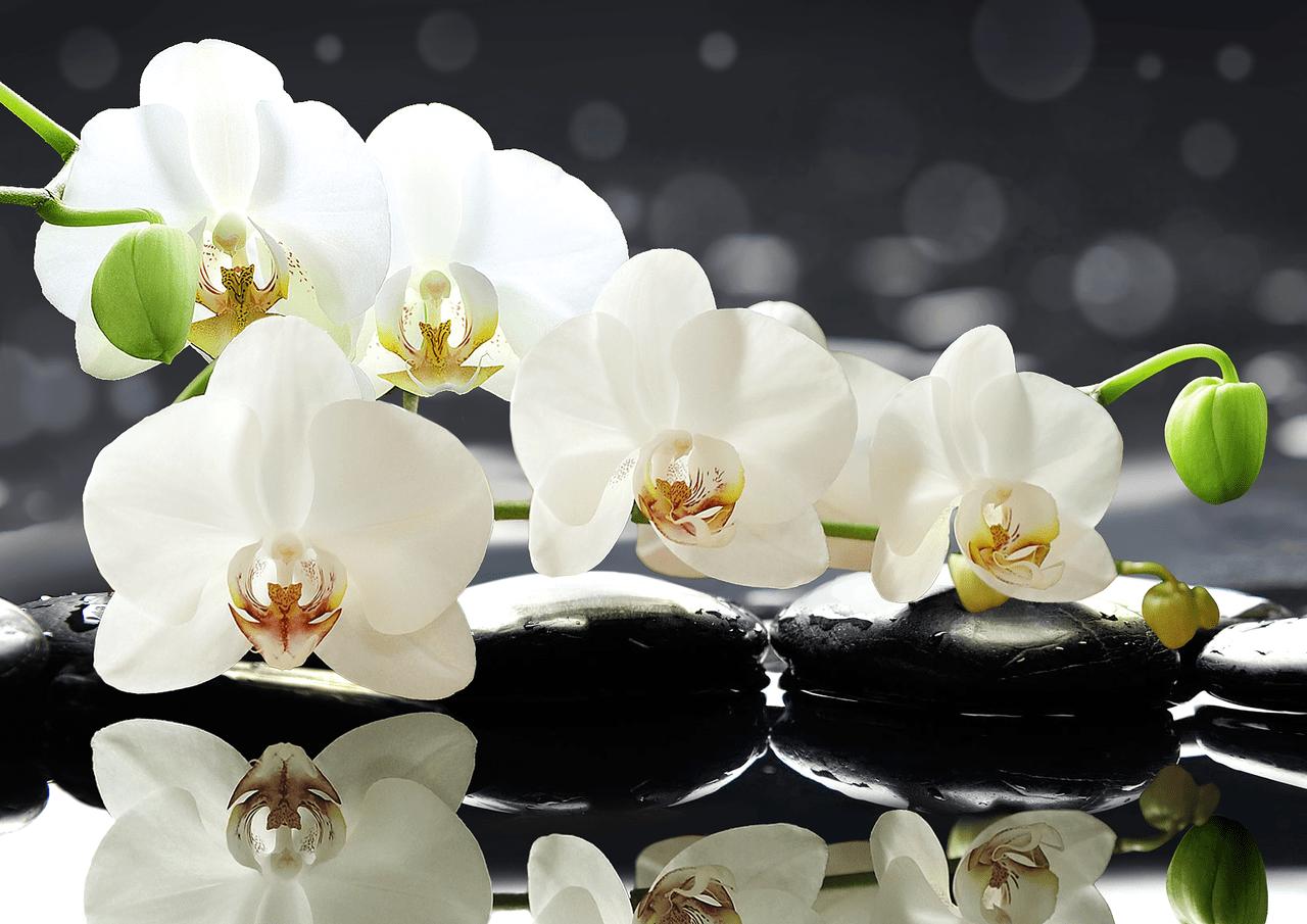 белые цветки - символ любви