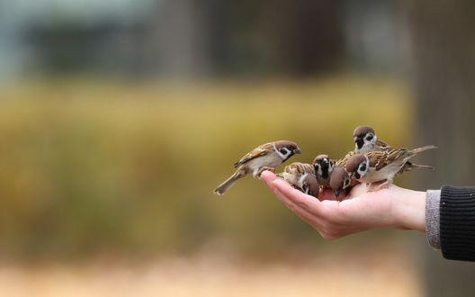 Пташечки на ладони