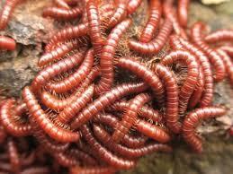 Приснился червяк — предсказание знаменитых сонников