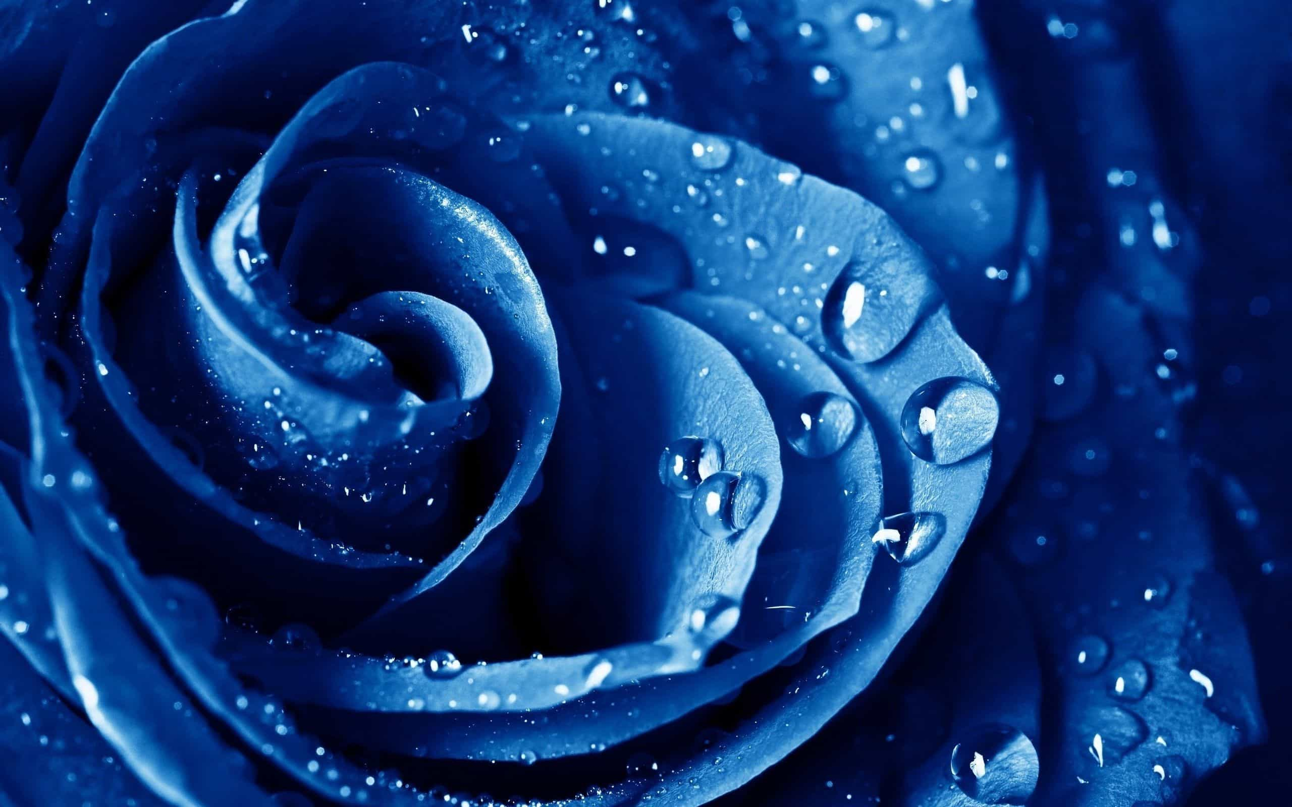 Синие лепестки
