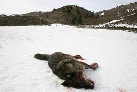 Мертвое животное на снегу