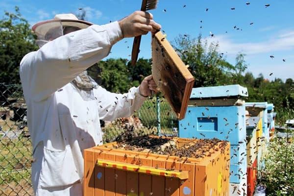 Улей пчел