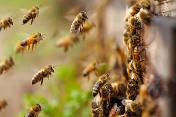 Летящие пчелки
