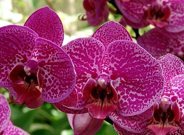 Приснилась орхидея, ждите успехов в делах и любви