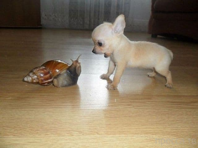 Собачка и улитка