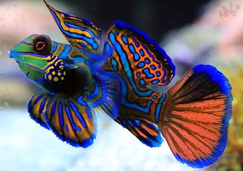 Ярка рыба