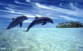 Два дельфина