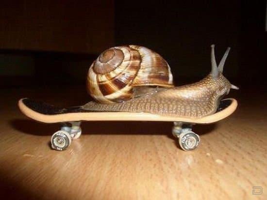 Улитка на скейте