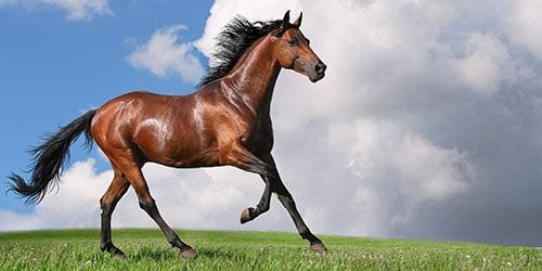 Активный конь