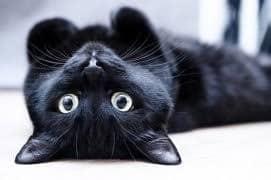 Приснилась черная кошка — толкование популярных сонников
