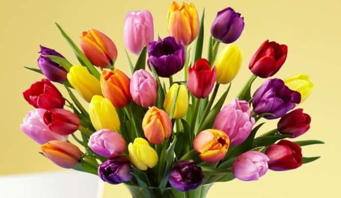 Разноцветные тюльпаны