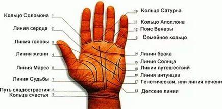 Линии на руке на левой и правой руке
