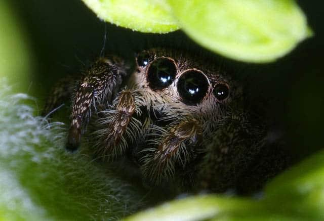 О чем говорят пауки в доме