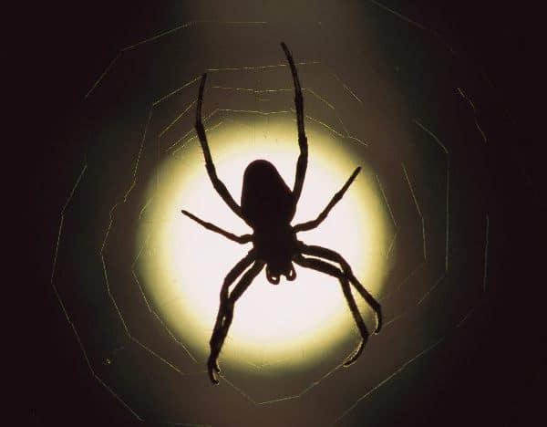 Приснились пауки к чему это сонник миллера