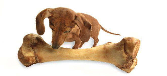 Кость для собачки