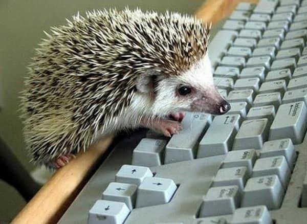 Ежик за клавиатурой