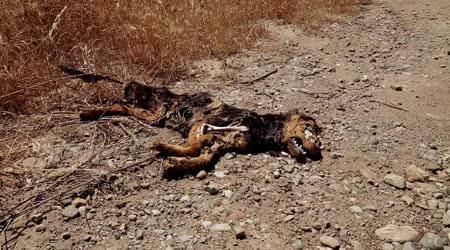 Умершая собака