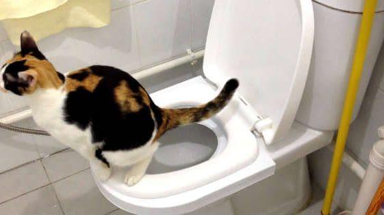 Кот на унитазе