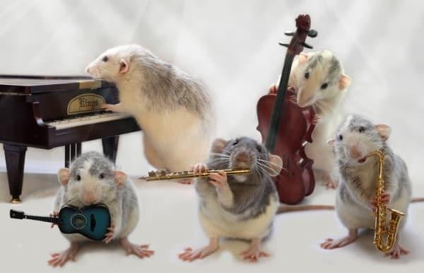 Концерт мышек