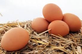 Несколько яиц