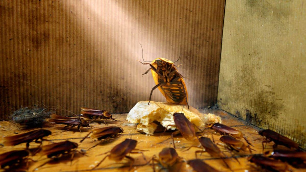 Несколько тараканов