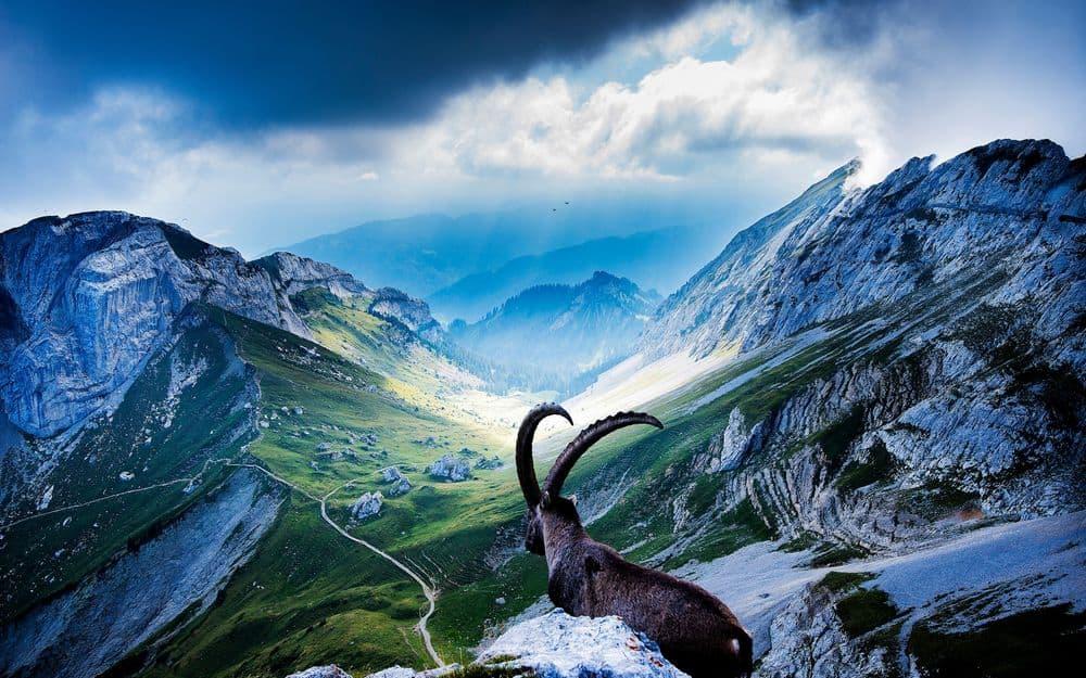 Козерог всегда стремится достичь вершину горы