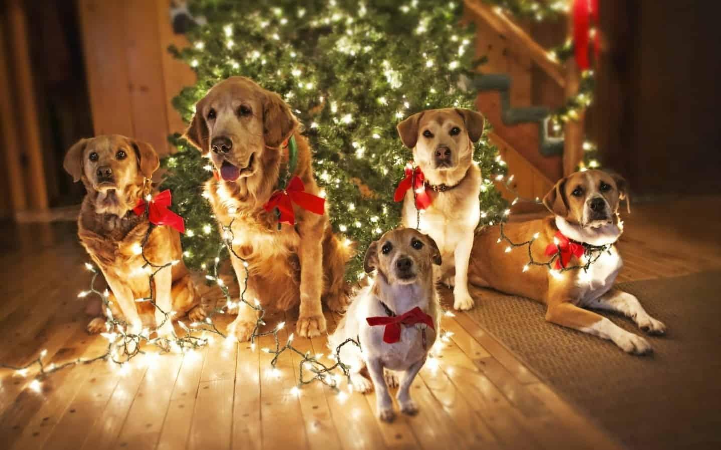 2018 год Желтой Земляной Собаки