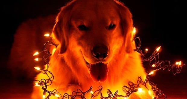 Жёлтая Собака покровитель наступающего года
