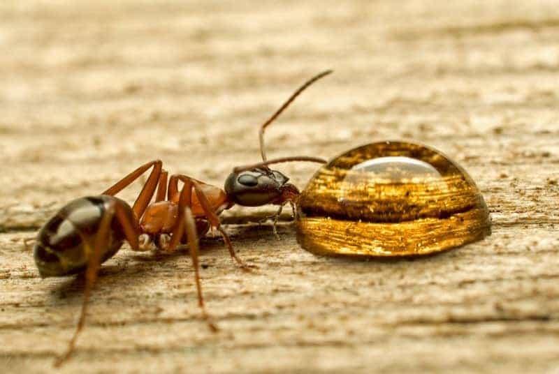 Примета муравьев в доме - активно бегают муравьи дома