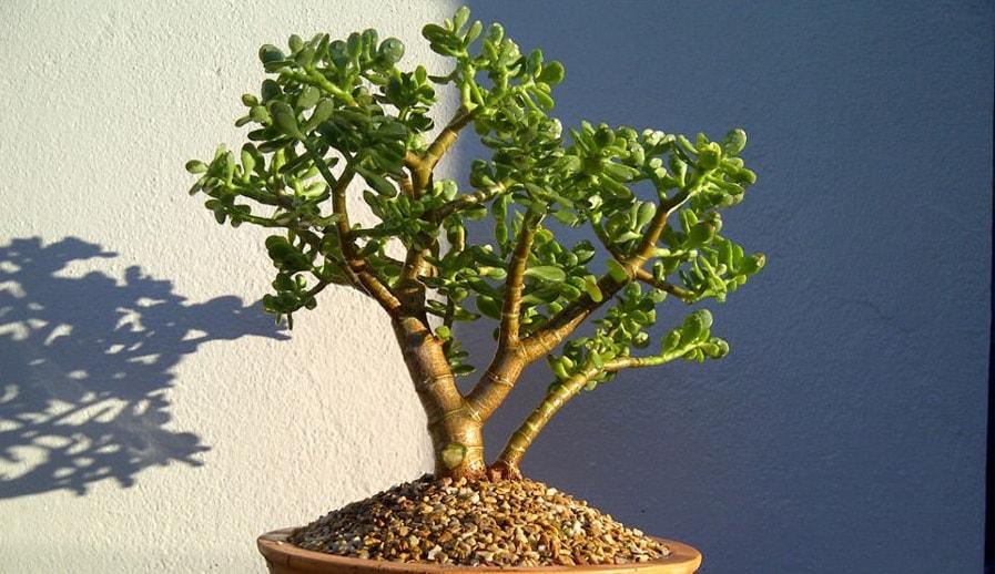 Растущее дерево