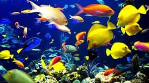 Разноцветные рыбы в аквариуме