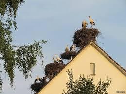 Аисты на крыше дома