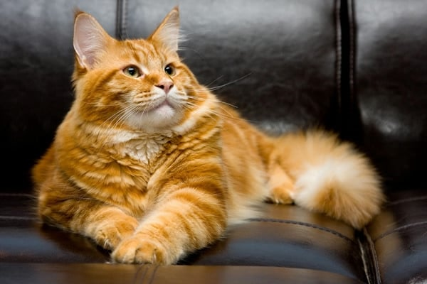 К чему коты бегут из дома