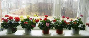 Яркие цветочки