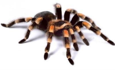 Яркий паук