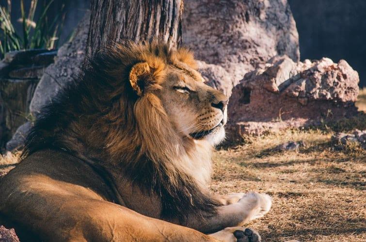 Лев в сексуальной жизни