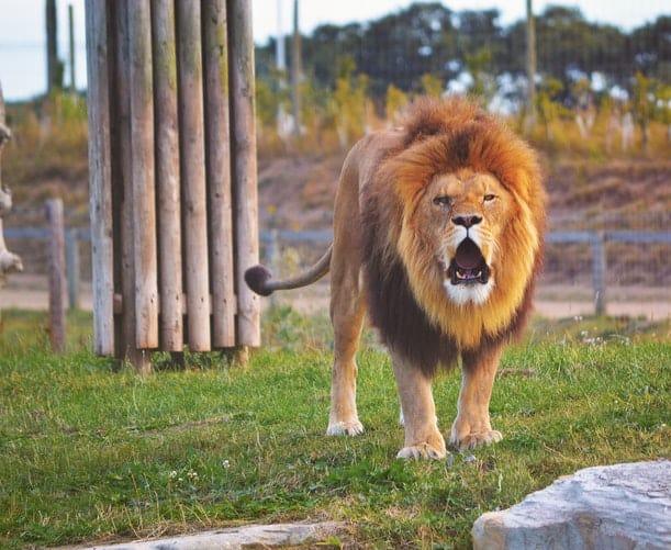 совместимость лев с другими знаками