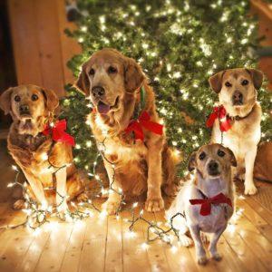 Узнайте, как пройдет год Собаки из его характеристики