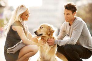 совместимость между двумя собаками