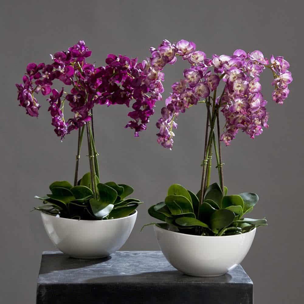 орхидее нужен особый уход